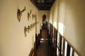 Gołuchów Jak powstawało Muzeum Leśnictwa