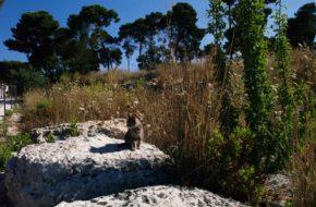 Syrakuzy Park archeologiczny Neapolis