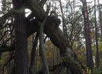 Leszno. Przez wydmy, bagna i piaszczyste drogi