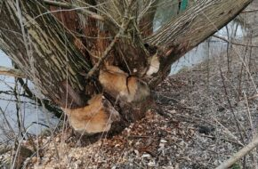 Warszawa Znalazłem tu bobry i nietoperze