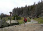 Harz. Spod padłych drzew wyrasta zdrowy las