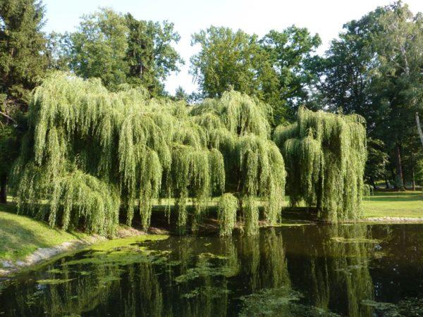 Kalisz Park Miejski, najstarszy w Polsce
