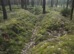 Osowiec. Przez las wokół dawnego fortu
