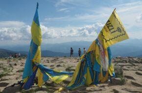 Howerla Niebiesko i żółto na szczycie
