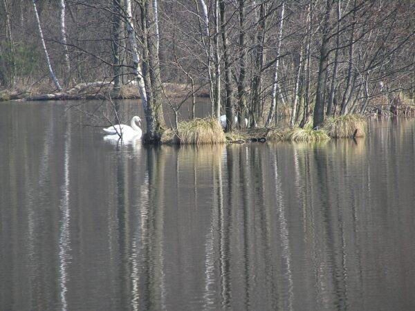 Mazowiecki Park Krajobrazowy Wydmy, lasy i bagna na skraju stolicy