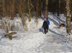 Żabieniec. Na biegówkach w Lasy Chojnowskie