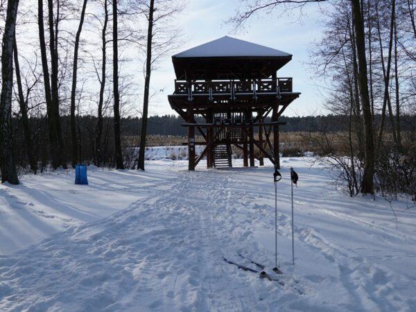 Żabieniec Na biegówkach w Lasy Chojnowskie