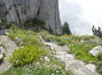 Rochers de Naye. Szarotki, świstaki i jezioro pod stopami