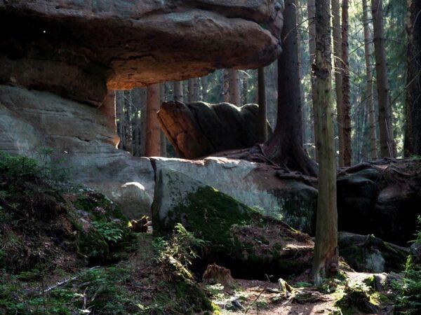 Skalne Grzyby Jak te prawdziwe, rosną w gęstym lesie