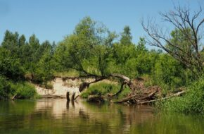 Radomka Meandrujemy wśród lasów i łąk